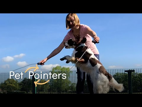 Have You Tried Dog Agility Training? | Pet Pointers