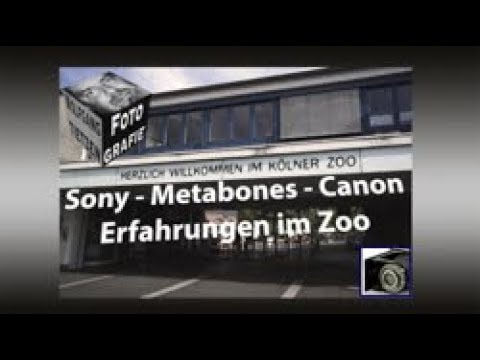 Mit Metabones Adapter im Kölner Zoo