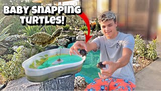 SURPISING PAUL With NEW Baby SNAPPING TURTLES!!