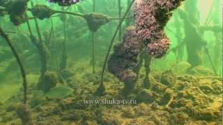 Подводная охота осенью