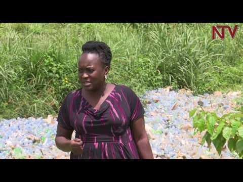 NTV Green: Who is polluting River Mpanga?