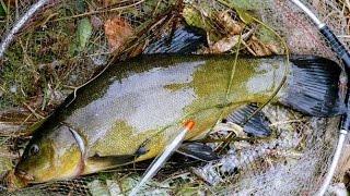 Советы по успешной рыбалке на карася