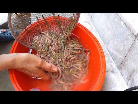 Ang pamamaraan ng tao parasite infection