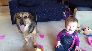 ТОП 5 лучшие видео Собаки играют с малышами.
