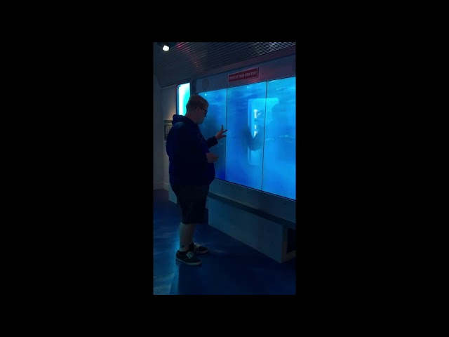 Man Scared by 'Shark' in Washington DC Museum
