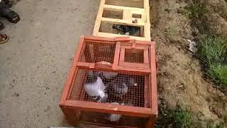 Airs Racing Pigeon Club Gujranwala Pakistan