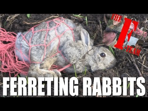 Ferreting Rabbits – it's the F-Team