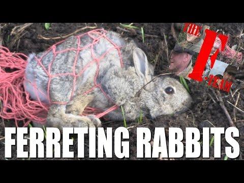 Ferreting Rabbits – it's the F-Team