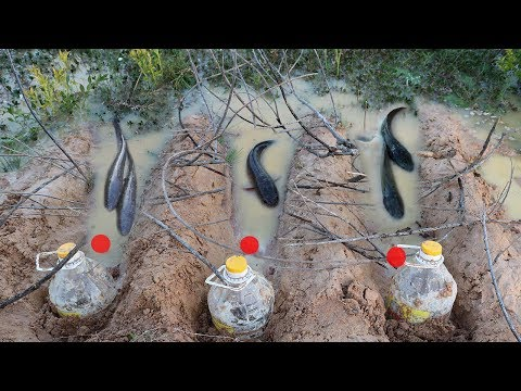 Amazing Deep Hole Bottle Fish Trap Catch A Lot Of Fish  Make By Smart Boy In Cambodia