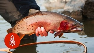 Tracking Trout With the Fish Whisperer | That
