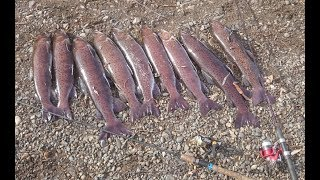 Сочинения на тему ловля рыбы