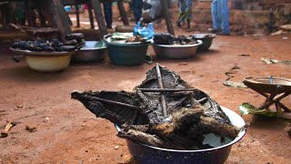 video: Bushmeat hunting in Central Africa: Giving forests back to communities could halt the next pandemic