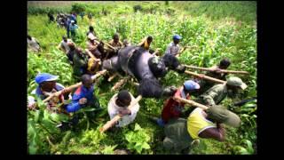 la fuerza de un gorila loquendo