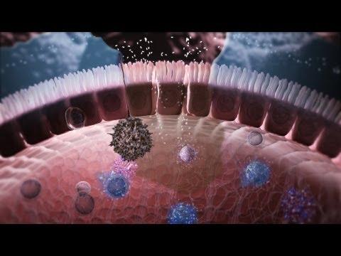 Papilloma virus si trasmette col bacio