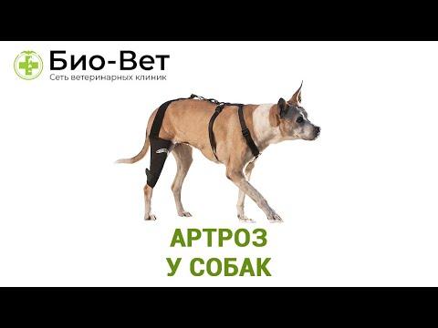 Артроз у собак. Ветеринарная клиника Био-Вет.