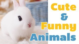 Cute & Funny Animals Compilation #3 : various animals rabbit, owl, flying squirrel  || Pet Stars