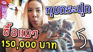 ซื้อแมว ราคา 150,000 บาท ถึงกับหมดตัว | พี่เฟิร์น 108Life - dooclip.me