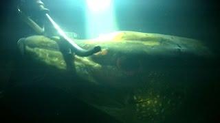 Отчеты о рыбалке на шушпанском водохранилище