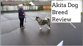 Akita Dog Review: Temperament, Nutrition, Grooming, Exercise, Training And Health Issues