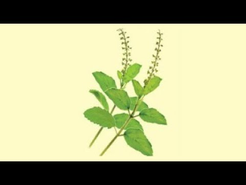 Why we use Krushnakamal and Tulsi leaves in the worship of Shrikrushna ?