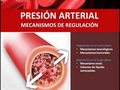 Mecanismo de regulación humoral de la presión arterial