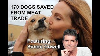 170 DOGS SAVED FROM DOG MEAT TRADE / Featuring Simon Cowell & Pete Wicks