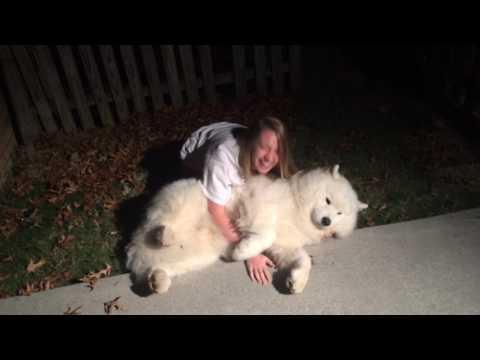 可愛狗狗不想回家 主人想抱卻抱不動><