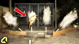 Next Level Cat Repellent - Funny Cat Reactions!