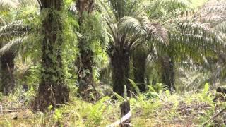 Zelená poušť - Film HD
