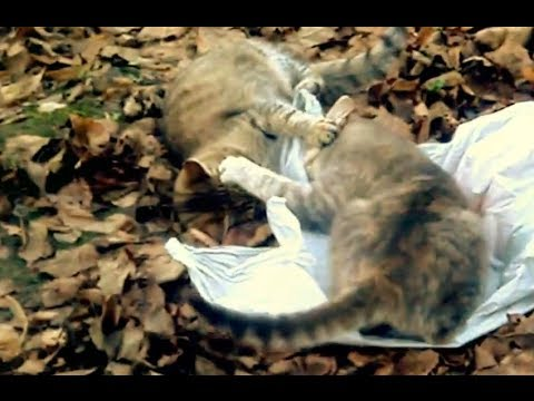 Crazy cats fight funny cats are struggling  funny, Amazing funny crazy cats fight