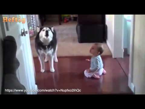 Partnervermittlung wolfen