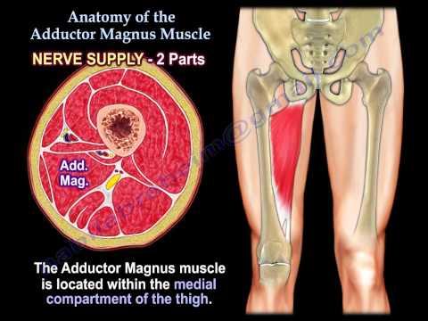 Wzmocnić mięśnie skośne i mięśnie brzucha
