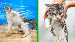 14 лайфхаков для кошек