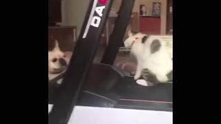 Dog rapes cat!
