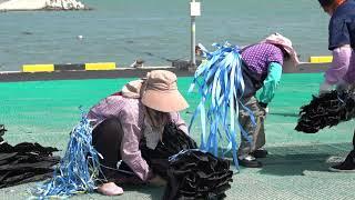 부산어촌특화지원센터 미역,다시마영