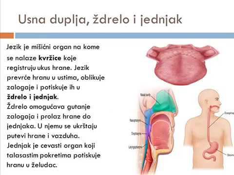 Papillomavírus gyógyszer