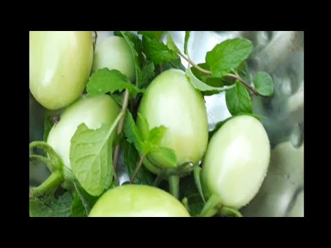 , title : 'Harvesting Fresh Mint & Tomatoes for curry ..subscribe for more videos