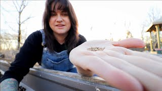 How to Sow Carrots Seeds (The simple trick to good germination every time!) | Gardening Tips