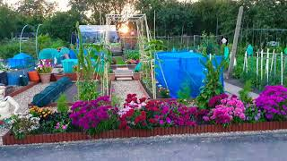Preparing my Allotment for judging day