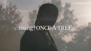 Rising | ONCE A TREE