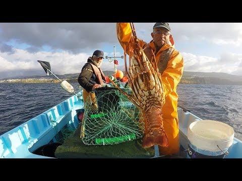 Le cause bilaterali per cacciare e pescare