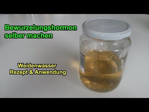 Weidenwasser selber herstellen – Bewurzelungshormon für Stecklinge machen / Rezept / Anwendung
