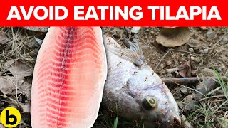 Why Health Experts Say To Avoid Eating Tilapia & Salmon