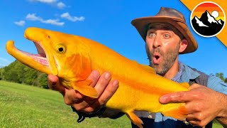GOLDEN TROUT - Animal Crossing's Rare Fish?