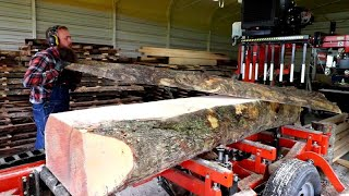 Passed Over By The Major Timber Industry This Log Had A Secret Under It's Bark: Curly Gold