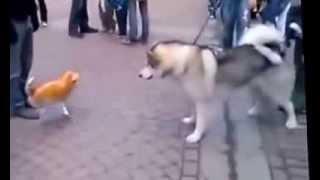 РЖАЧ! Надувной кот против собаки! Жми!
