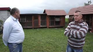 preview picture of video 'J. Augustyniak & A. Czeladziński - Oddział PZHGP 0188 - Ślesin - o hodowli - 21.06.2014r.'