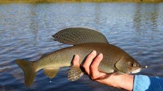 Рыбалка в усть каменогорске форум