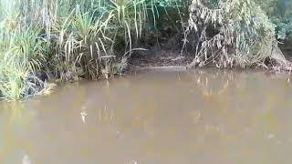 preview picture of video 'Teryik ikan peang'.'