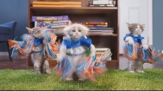 Puppy Bowl - Video Youtube